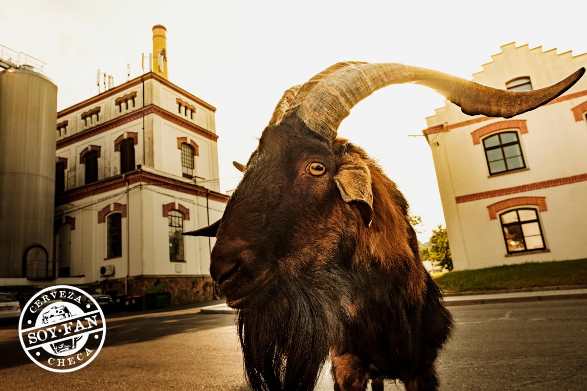 CERVEZA KOZEL: La cabra más famosa de Chequia
