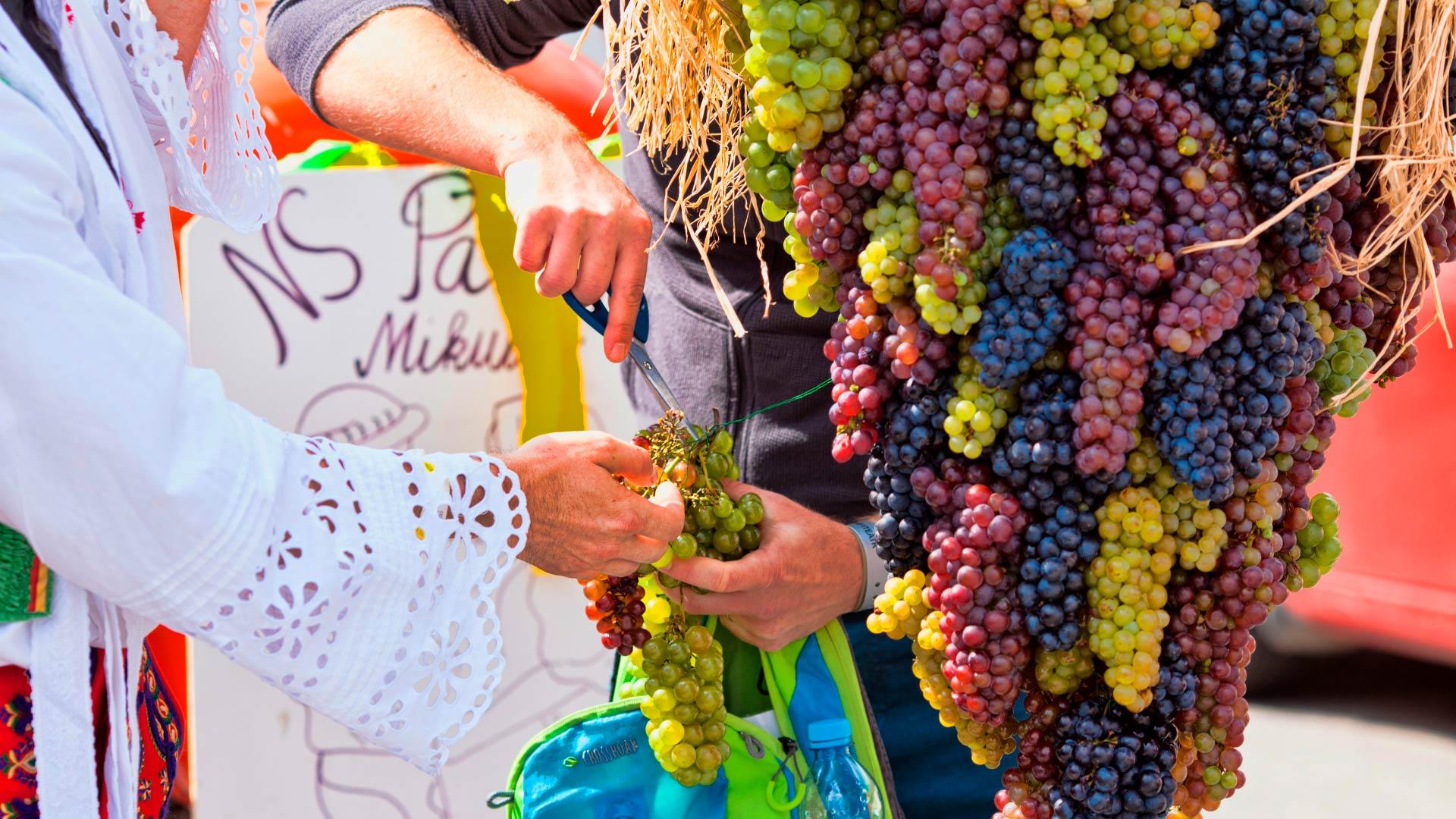 uvas de moravia del sur