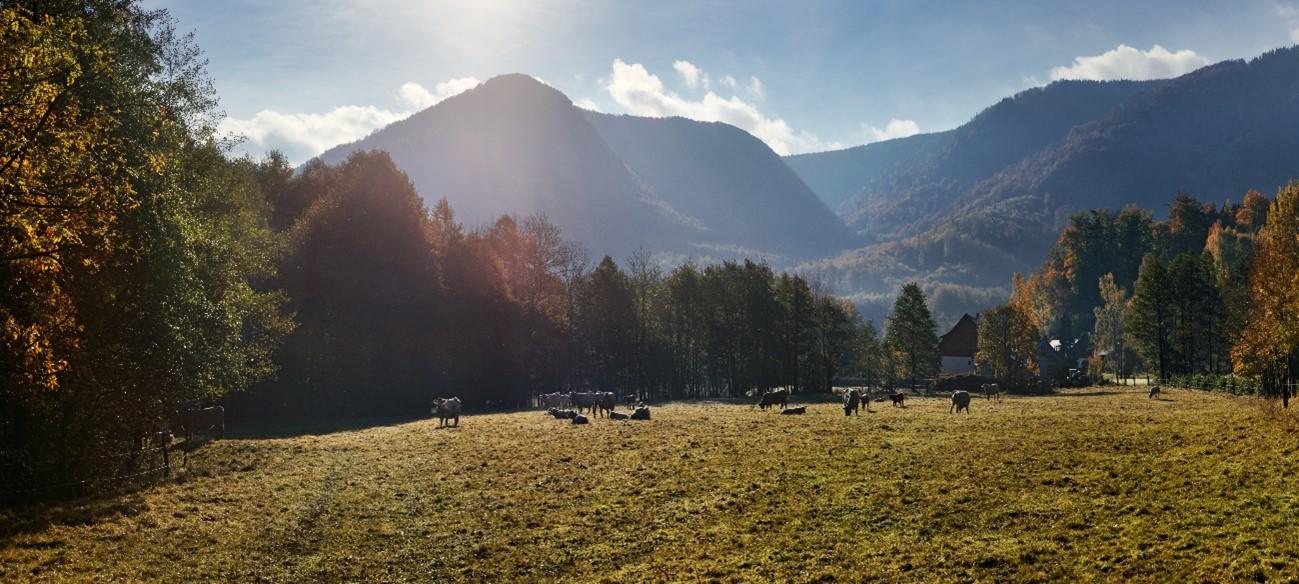 Florestas tchecas de faias, patrimônio mundial, joia rara nos horizontes de Liberec.